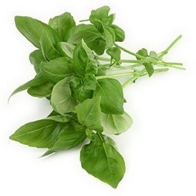 Basil has a number of wonderful properties including anti-viral, anti-bacterial as well as lowering your blood pressure.