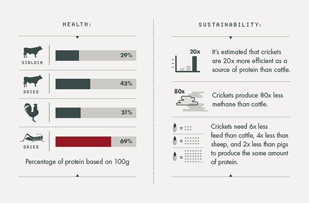 cricket flour is better for the environment