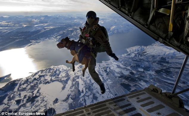 sas special forec paratrooper with dog