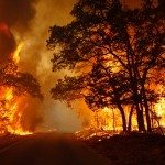 How to Survive a Wildfire